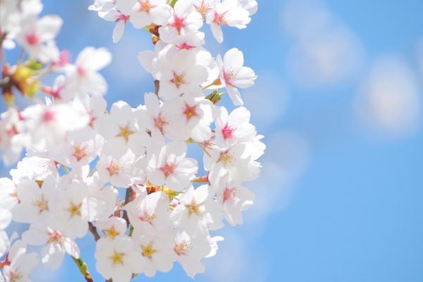 春 ~Spring~